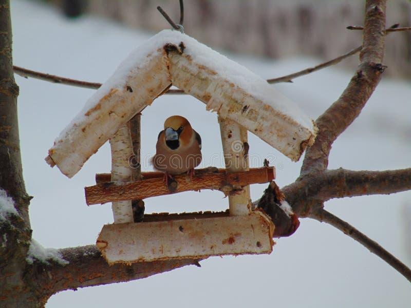 Branch, Bird Feeder, Twig, Wood royalty free stock image