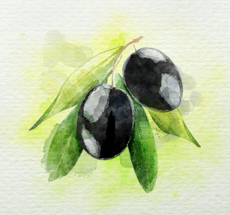 A branch of black olives watercolor stock illustration