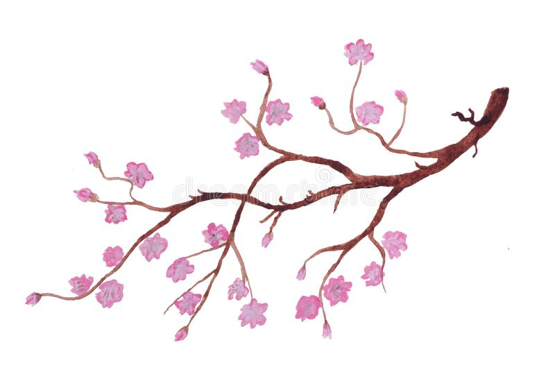 The Branch Of Blooming Cherry Blossom Stock Illustration