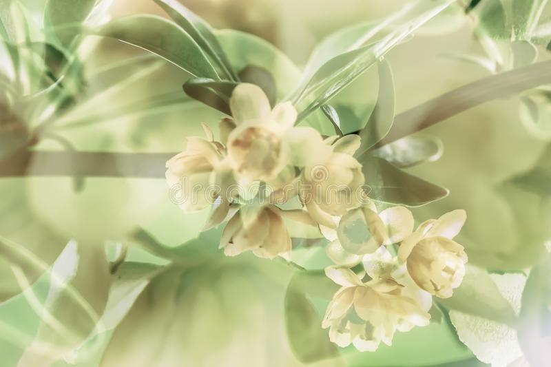 Branch of blooming spring tree, yellow flowers. Vintage styled color. Abstract blurred toned background royalty free stock images
