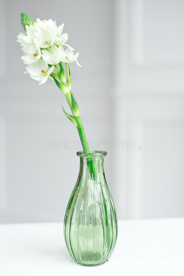 Branch of blooming white hyacinths in a glass vase. stock image