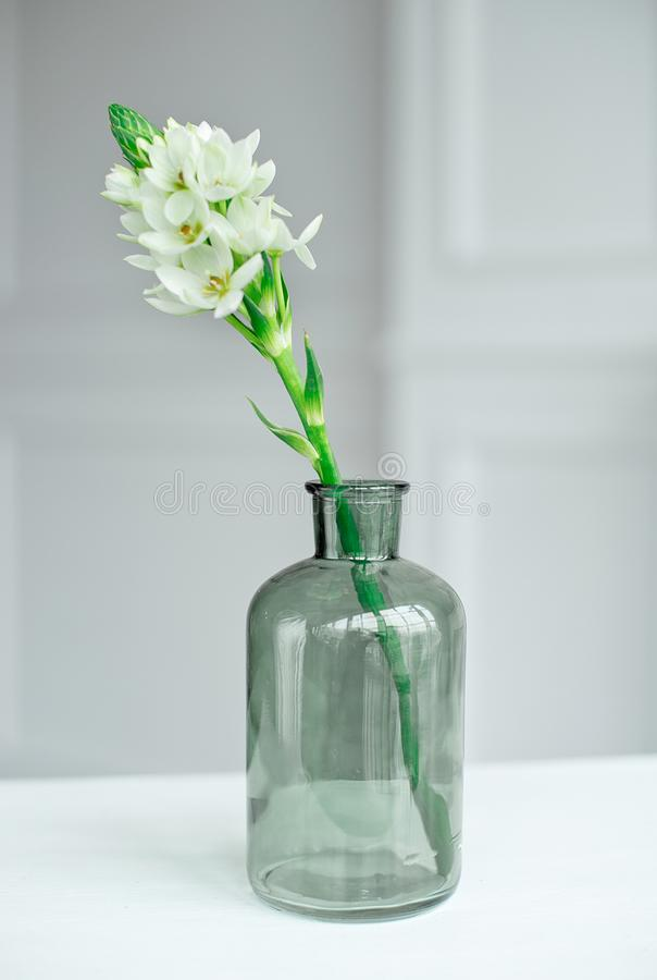 Branch of blooming white hyacinths in a glass vase. royalty free stock image