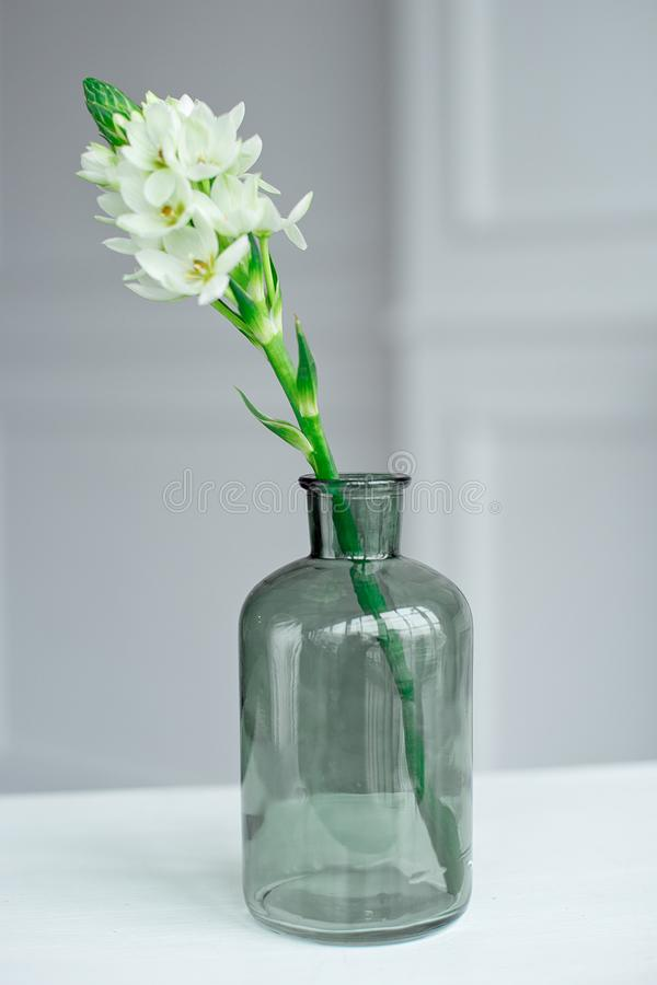 Branch of blooming white hyacinths in a glass vase. stock photo