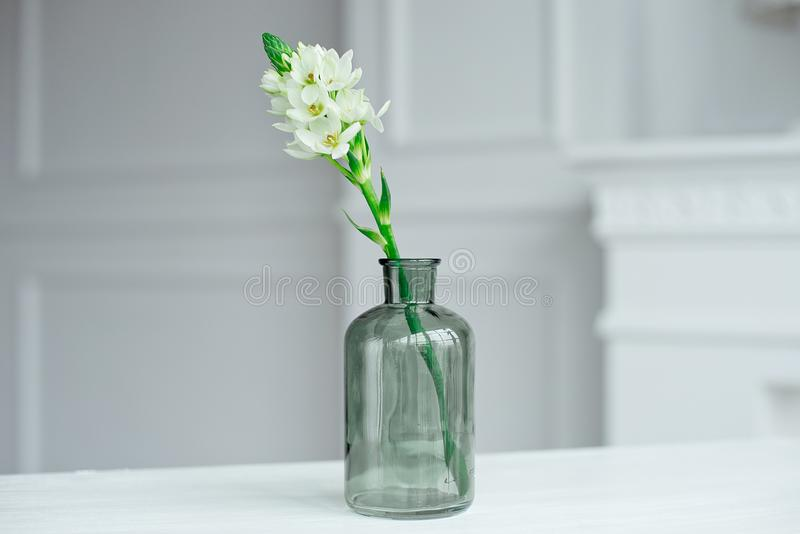 Branch of blooming white hyacinths in a glass vase. royalty free stock photos