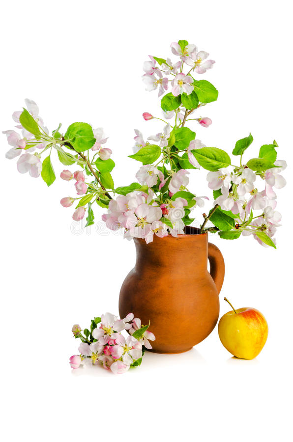 Branch of blossoming apple-tree in clay pitcher on white backgro royalty free stock photo