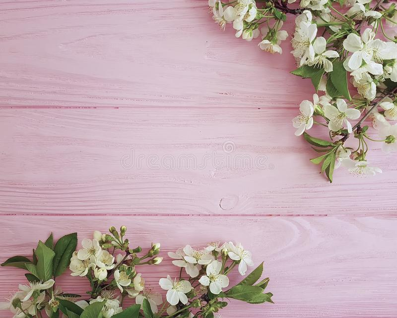 Branch of blossoming cherry freshness floral on a pink wooden background, spring royalty free stock photos