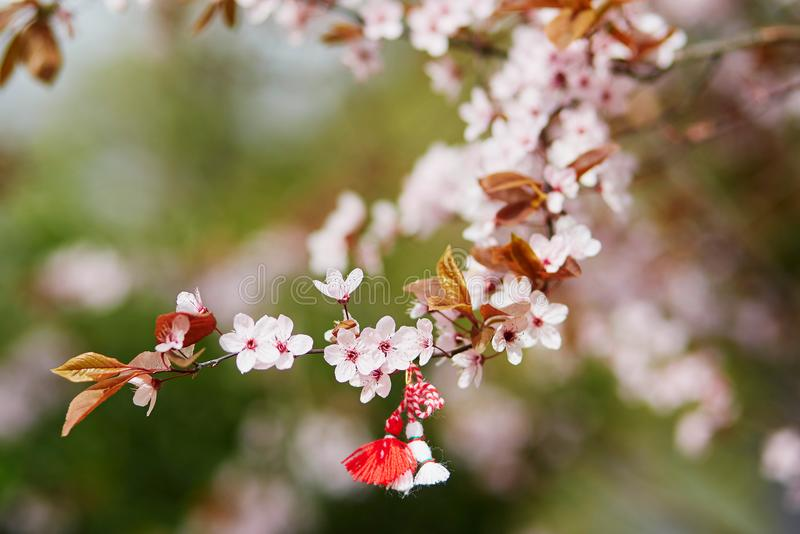 Branch of cherry tree with martisor, traditional symbol of the first spring day stock photos
