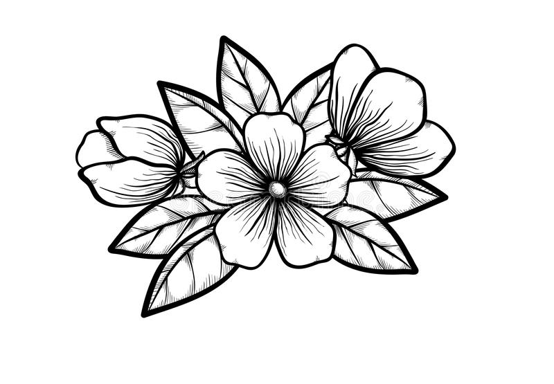 Branch of blossoming tree in graphic black white s vector illustration