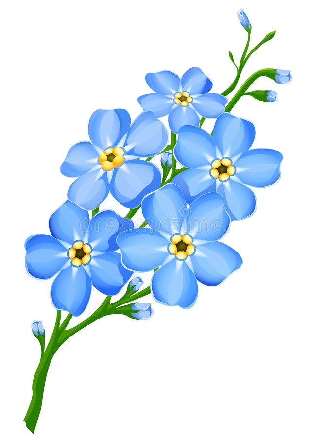 Branch of blue forget-me-not flowers isolated vector illustration