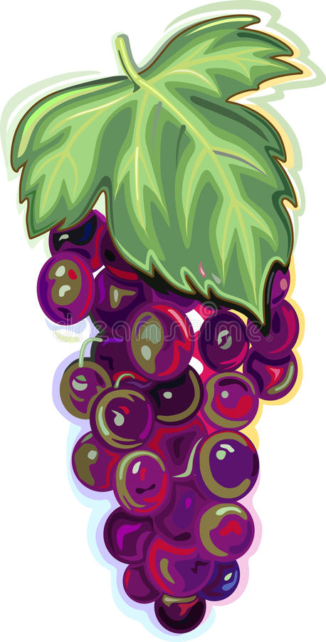 Branch of blue grapes royalty free illustration