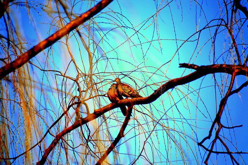 Branch, Blue, Sky, Tree royalty free stock photography