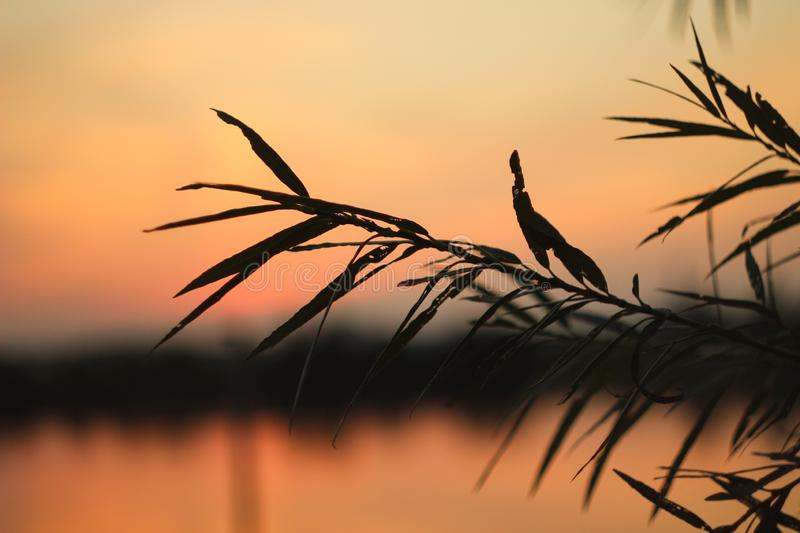 Branch of a Bush on the background of sunset royalty free stock photos