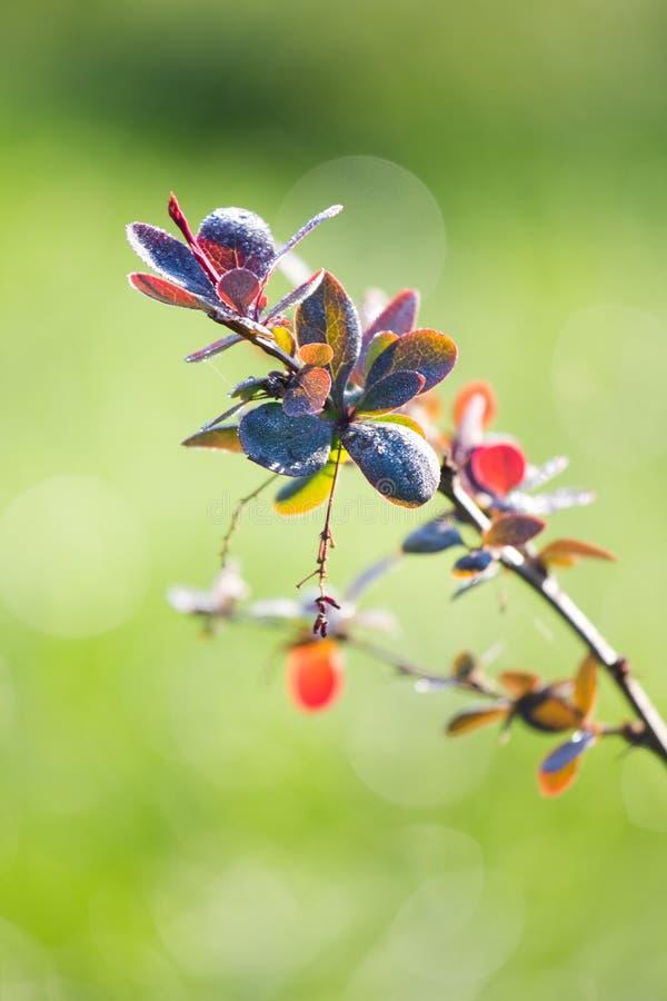 Branch bush in sunlight royalty free stock image