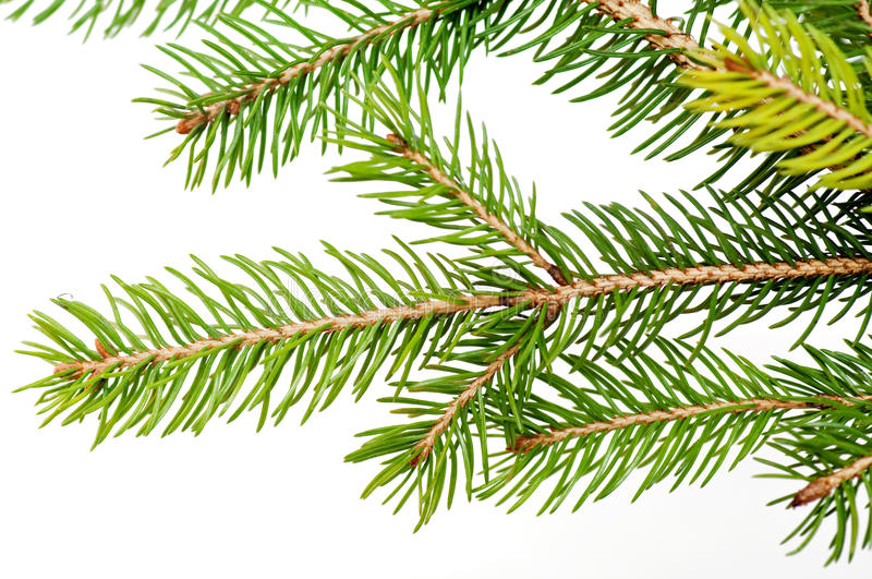 Download Branch Of The Christmas Tree Stock Photo - Image of close, needle: 16970272