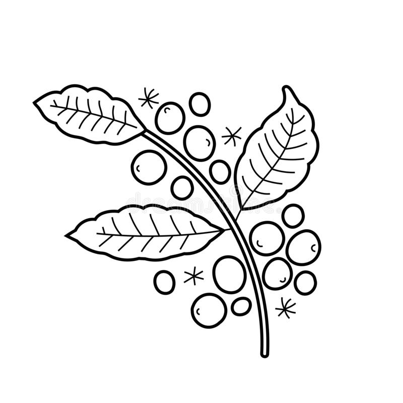 Branch Of Coffee Plant, Vector Isolated Line Art, Linear ...