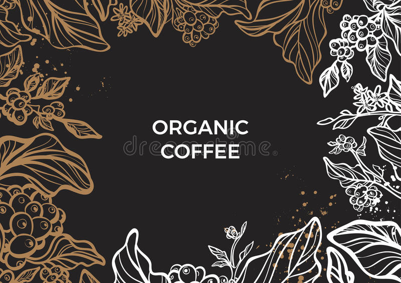 Branch of coffee tree with leaves, flowers and coffee beans. Vector template stock illustration