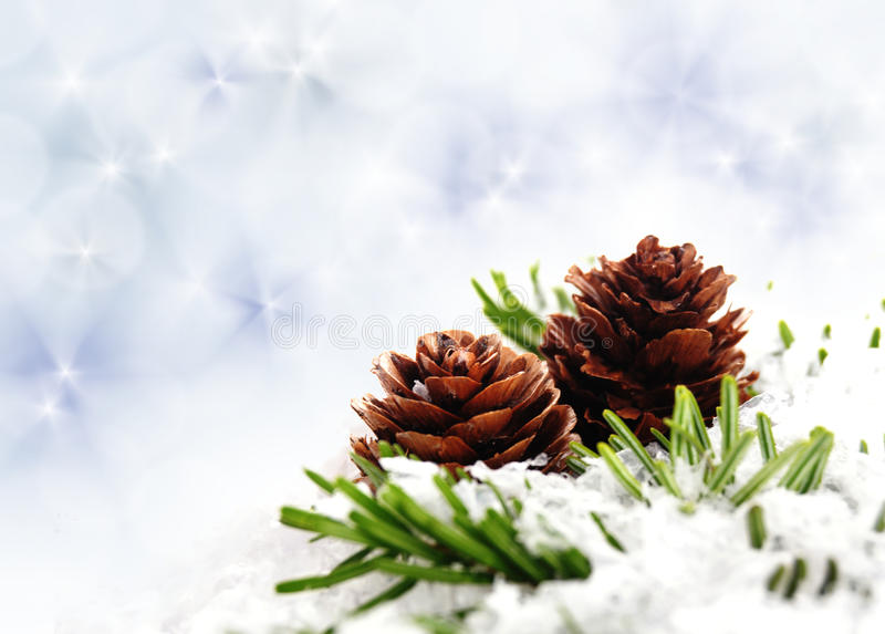 Download Branch with cone stock photo. Image of cone, christmas - 35017118