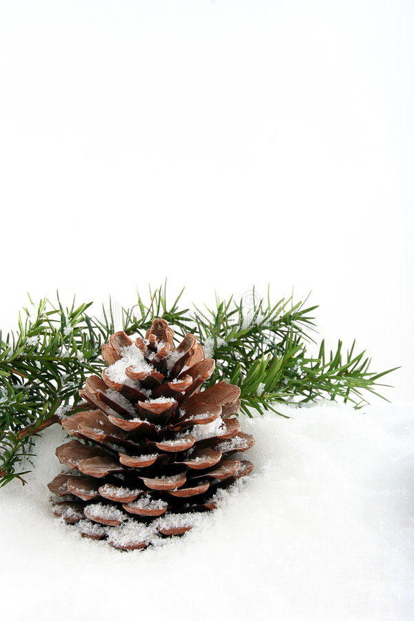 Branch And Cone On White Snow Stock Image