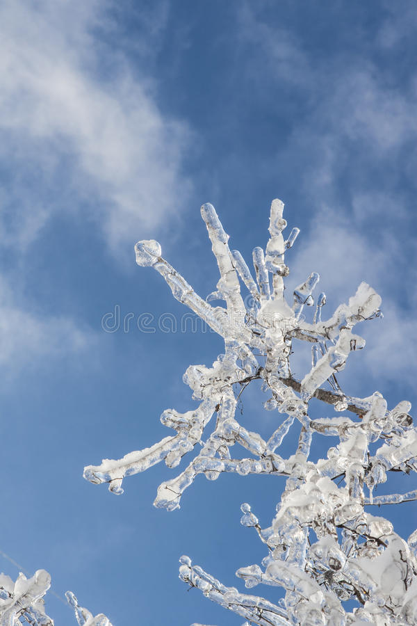 Download Branch Covered With Ice In Sunlight Stock Photo - Image: 38709712