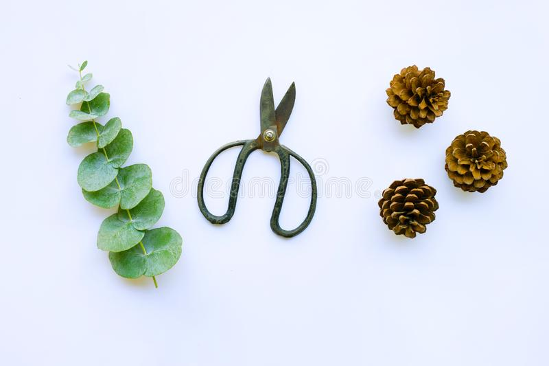 Branch of eucalyptus with  vintage scissors and pine cones on white stock image