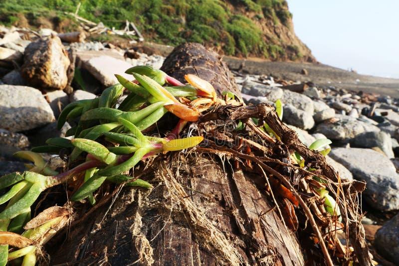 Branch fallen in the beach stock image