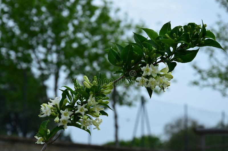 The branch of a flowering tree. Spring is over here stock images