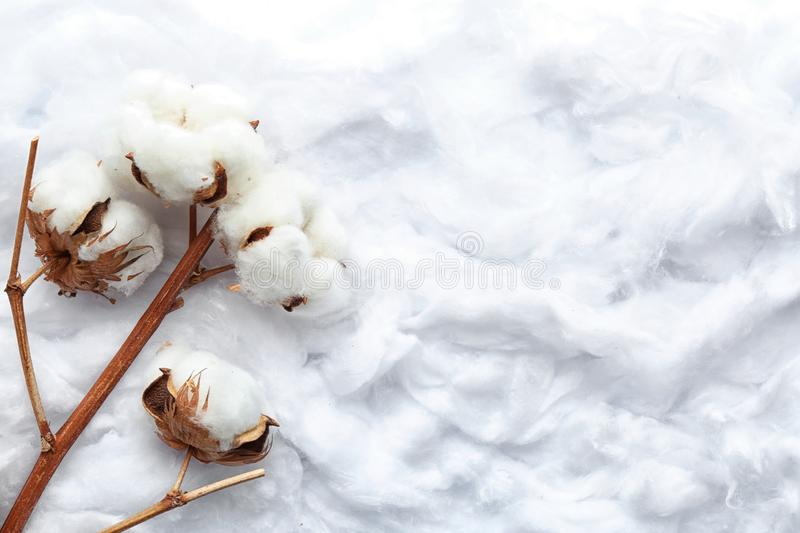 Branch with flowers on clean cotton, top view. Space for text stock photo
