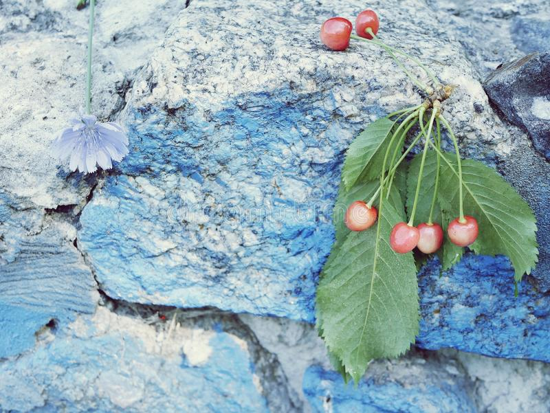 A branch of fresh cherries on a background of blue granite stones royalty free stock photography