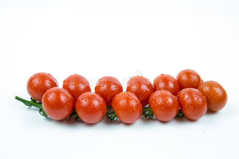 A branch of fresh red tomatoes stock image