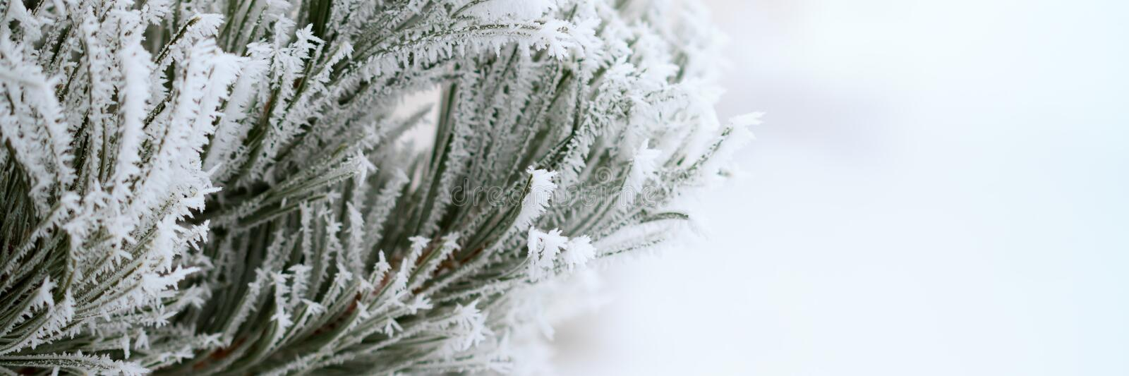 Branch with frost. Panoramic view royalty free stock photos