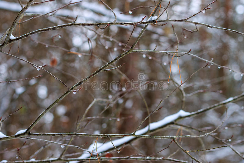 Branch with frozen drops royalty free stock photography