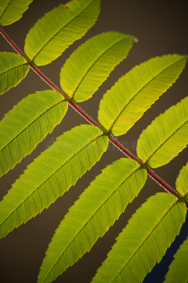 Branch with green leafs. In illuminating sunlight royalty free stock photography