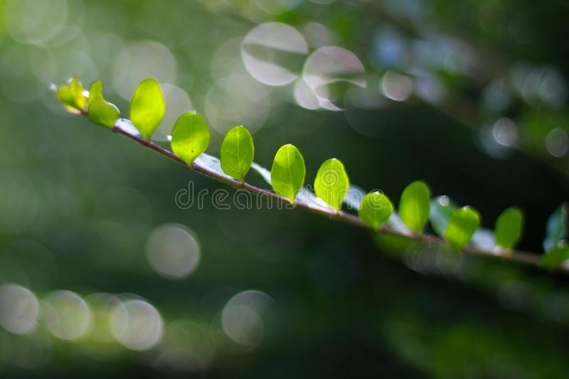 Branch with green leaves stock photo