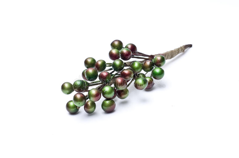 Branch of green shiny berries stock images