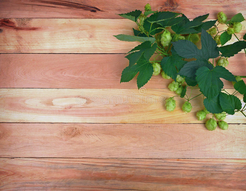 A branch of hops with cones and leaves on an old wooden background. stock images