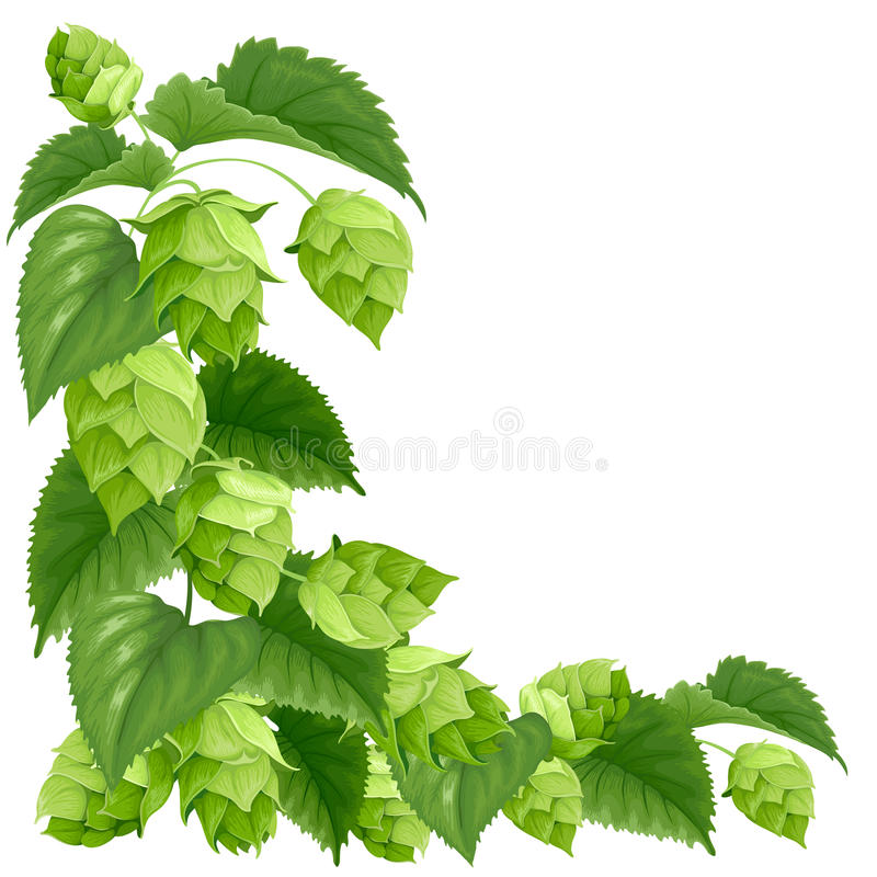 Branch of hops. Isolated on white background royalty free illustration