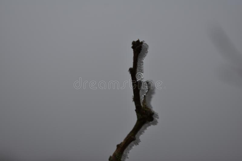 Branch with ice stock photo