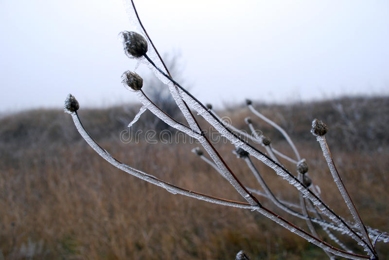 Branch in the ice stock photos