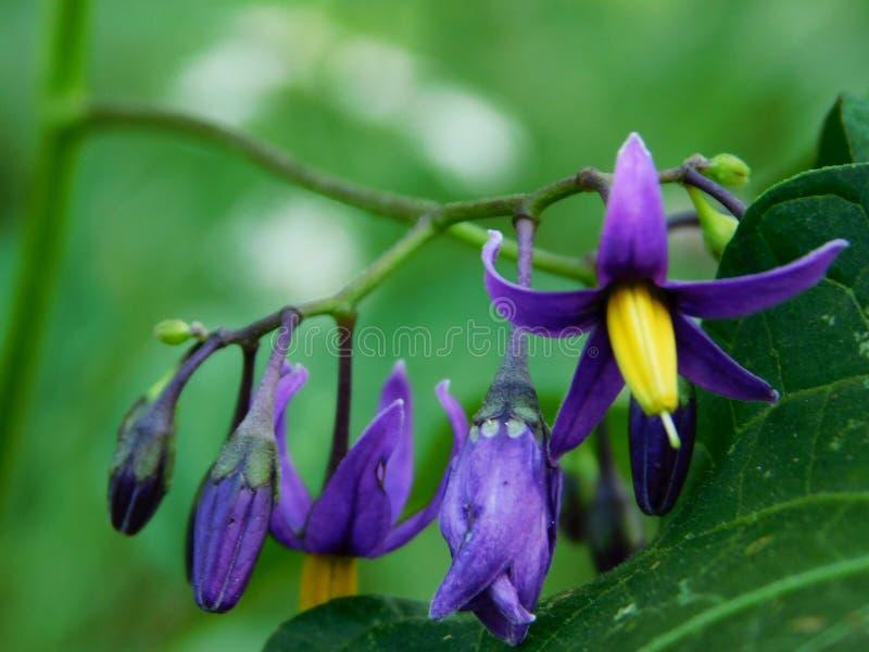 A branch of an indigo meadow flower stock photo