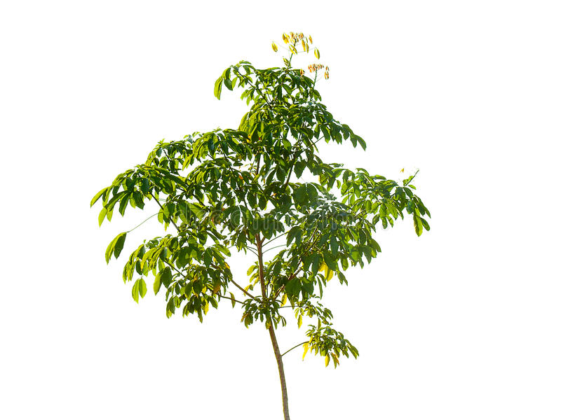 Branch on isolated. stock photos