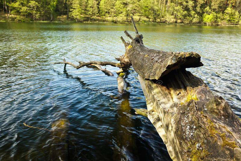 Branch in the lake royalty free stock image