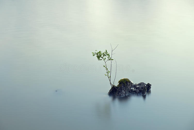 Branch on a lake stock photography
