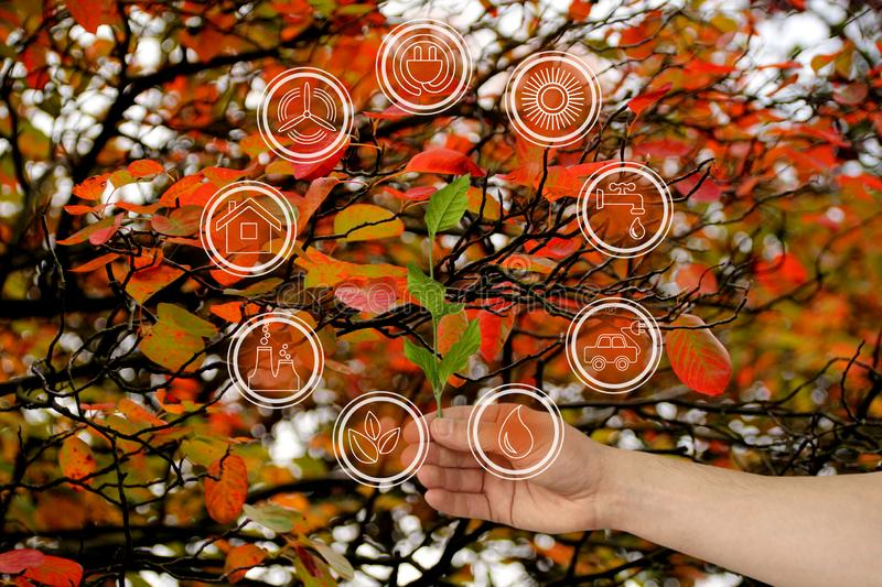 Branch with leaves in hand on a beautiful autumn background of red foliage of trees and environmental protection elements icons,. Ecological concept, close-up royalty free stock photo
