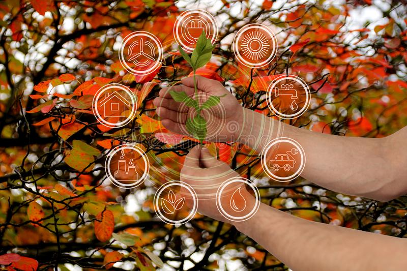 Branch with leaves in hand on a beautiful autumn background of red foliage of trees and environmental protection elements icons,. Ecological concept, close-up stock photography