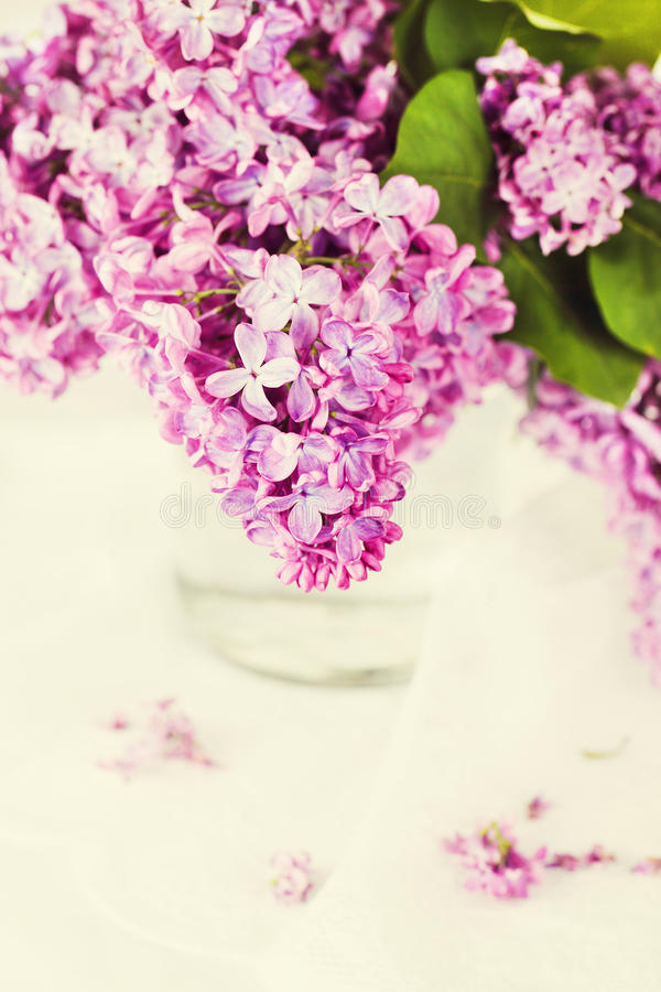 Download Branch of lilac stock photo. Image of greeting, lilac - 24645482