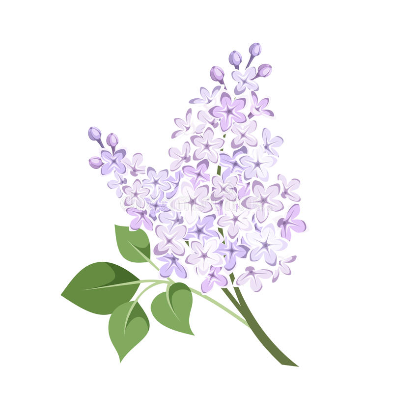 Branch Of Lilac Flowers. Vector Illustration. Stock Vector