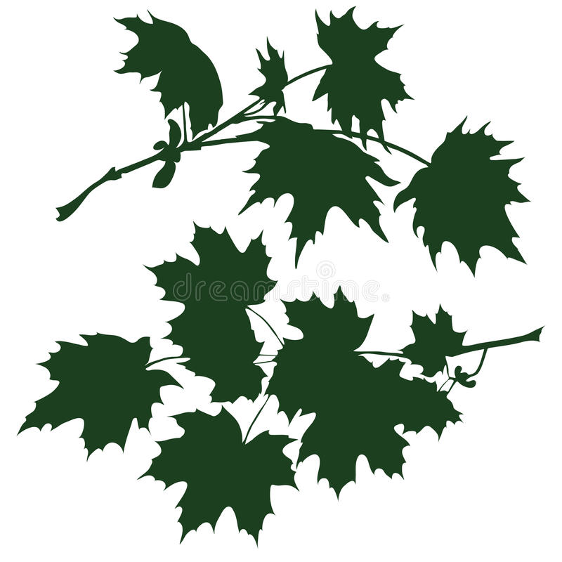 Branch of maple. Silhouette the branch of maple. vector illustration stock illustration