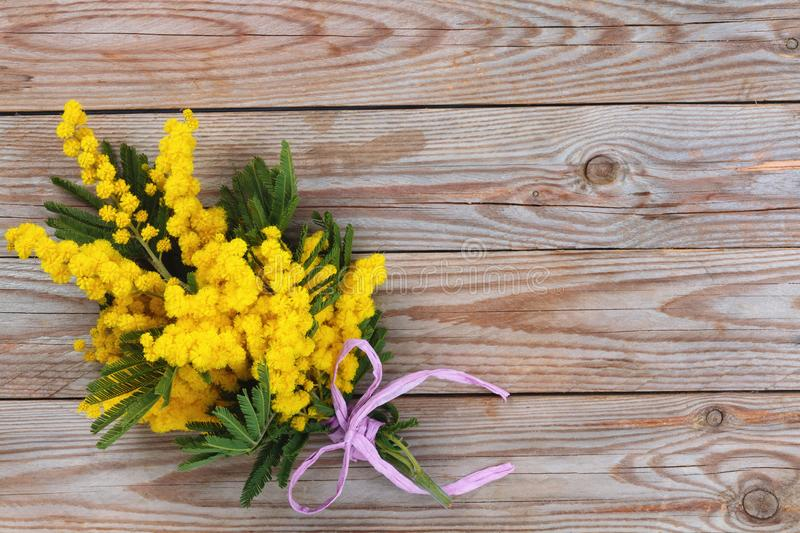 Branch of mimosa. Close up shot of mimosa flowers on wooden rustic background royalty free stock photography