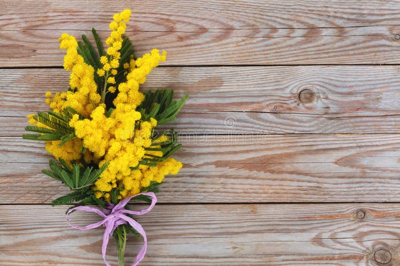 Branch of mimosa. Close up shot of mimosa flowers on wooden rustic background royalty free stock photo