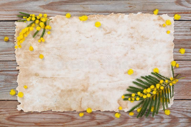 Branch of mimosa. Close up shot of mimosa flowers on wooden rustic background royalty free stock photos
